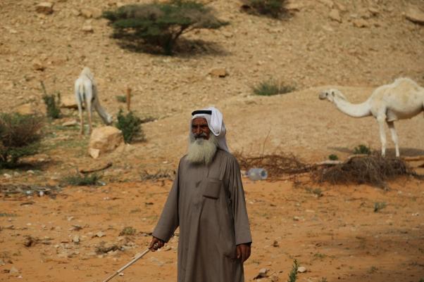 Bedouin herding camels