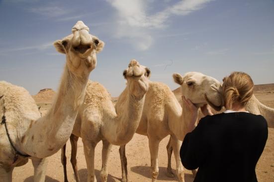 Camel crowd at the Edge of the World, Saudi Arabia