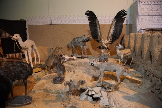 Janadriyah: Arabian wildlife