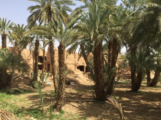 Date orchard at Raudat Sudair ruins, Saudi Arabia