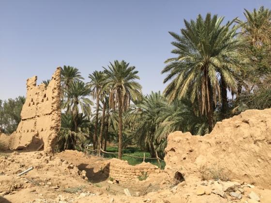 Date orchard at Raudat Sudair traditional mud village, Saudi Arabia