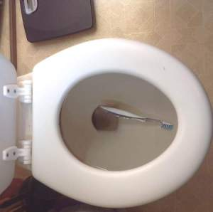 Toothbrush in toilet