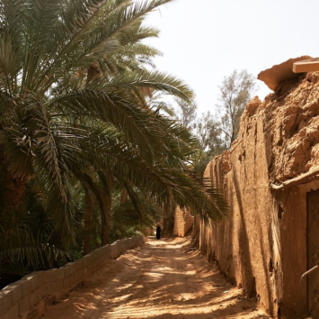 Along a road separating the ruins of Raudat Sudair from a date orchard