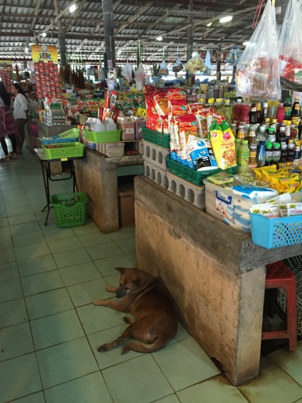 Dog at the Khao Lak Market, Thailand