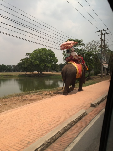 Elephant along the road, Thailand