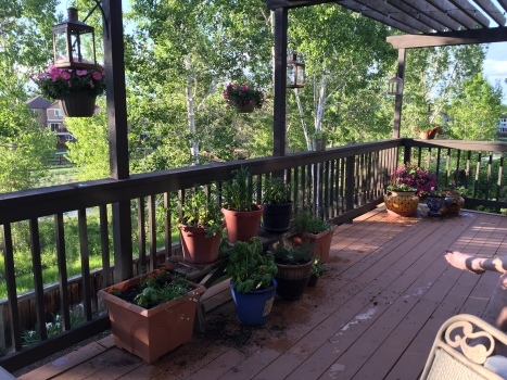 Still life: Deck with herbs, flowers, and the Beloved's foot